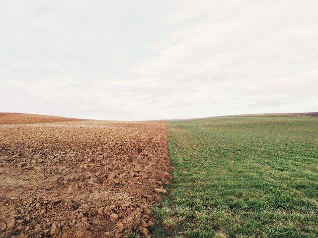Покровные культуры с успехом улучшают состояние почвы