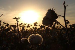 Посевная площадь в Туркестанской области в этом году составит более 800 тыс. гектаров
