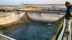 Потенциал рыбного хозяйства РК может составить 600 тыс тонн
