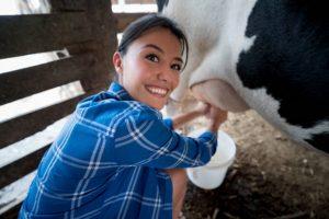 девушка доит молоко