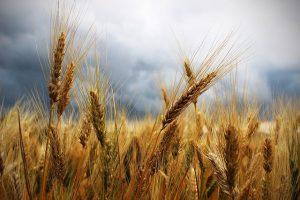 Предварительный перечень заявителей на получение квоты для экспорта пшеницы на апрель 2020 года