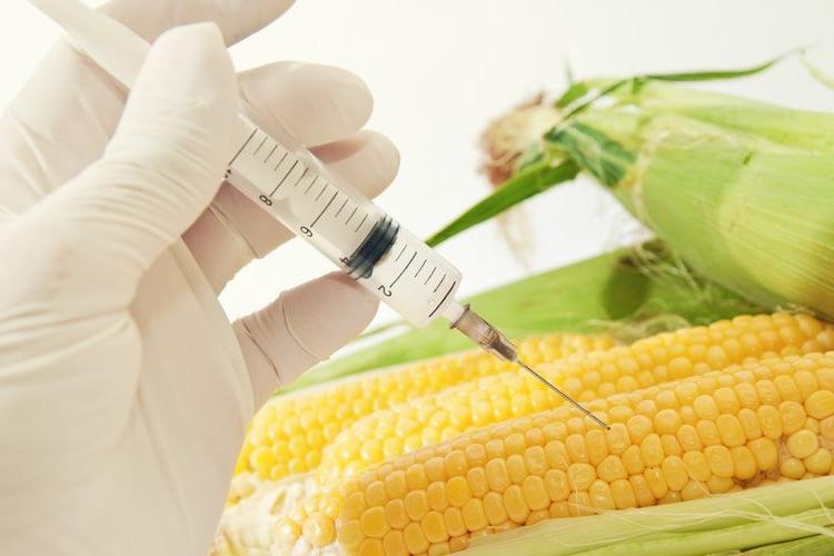 антибиотики в сельском хозяйстве