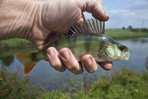 Программы «КазАгро» по развитию рыбной отрасли
