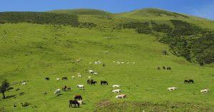 Проекты по развитию животноводства могут получить финансирование