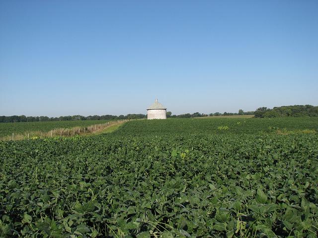 Производители органической сои могут быть конкурентоспособными, используя минимальную обработку почвы или не обрабатывая ее вовсе