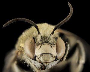 Пчелы полетят на Марс