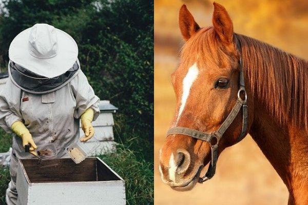 Развитие бизнеса пчеловодства и животноводства с помощью Фонда финподдержки сельского хозяйства