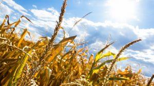 страхование от засухи