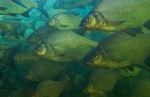 Рациональный подход к ведению рыбного хозяйства