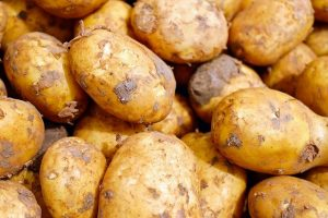 Риски при ранней посадке картофеля