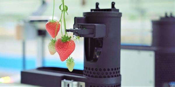 Робот-уборщик урожая