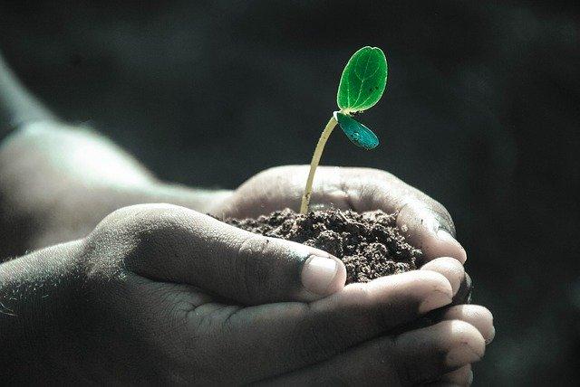 Сохранение и повышение плодородия почв – залог будущего урожая