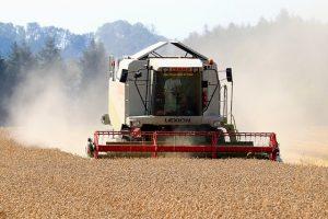 С начала года из Костанайской области экспортировано 635,3 тыс. тонн зерновых