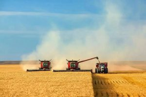 Уборка-зерновых-и-зернобобовых-завершена-в-Акмолинской-области