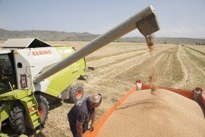 уборка урожая в Алматинской области