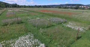 Увеличение разнообразия растений равно меньше пестицидов