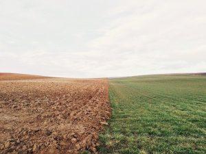 Устойчивые сельхозметоды могут спасти средиземноморские почвы