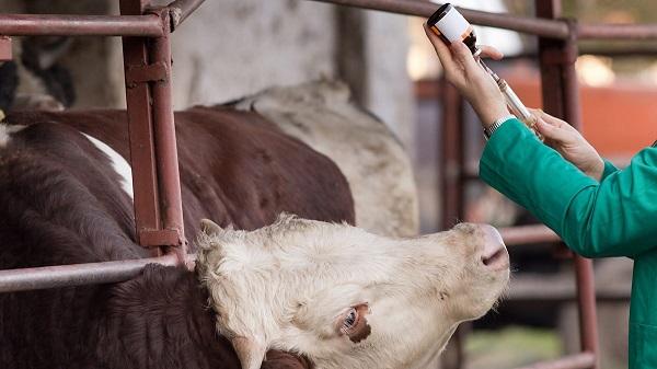 Лицензирование ветеринарной деятельности в Казахстане