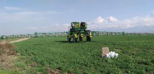 Ученые КазНИИЗиКР проводят фитосанитарный мониторинг состояния посевов озимых зерновых культур