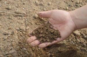 Ученые КазНИИ ПиА проводят работы по изучению закономерностей формирования почв