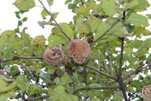 Ученые дали рекомендации по защите плодовых культур от вредителей