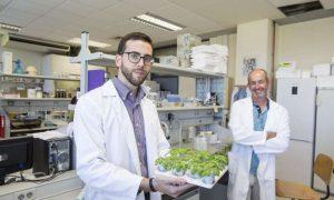 Ученые сделали шаг к устойчивости сельхозкультур к агрессивным климатическим условиям