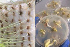 фитоэкспертиза семян