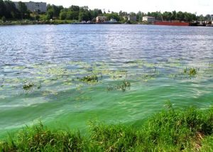 Цветение воды в водоемах и как с этим бороться