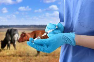 Защитите свое стадо от снижения рождаемости и надоя