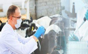 ветеринарные проверки в казахстане