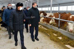 в Северо-Казахстанской области запущена молочная ферма ТОО «Қызылжар Сүт»