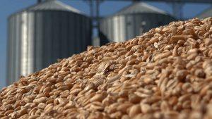 заготовка сельхозпродукции