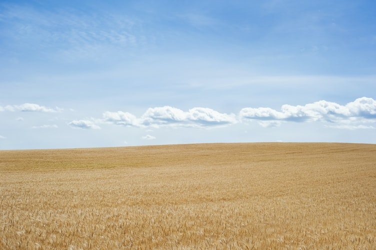 земли сельхозназнаения