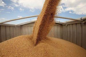 элеваторы и зерно