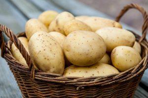 Алматинским картофелем заинтересовалась транснациональная компания