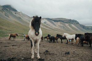 лошадь на пастбище