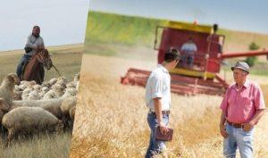 В сельском хозяйстве трудится свыше миллиона казахстанцев
