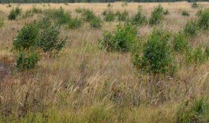 неиспользуемые земли сельхозназначения