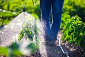 опрыскивание растений пестицидами
