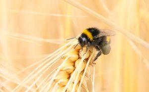 полезные сельскохозяйственные насекомые