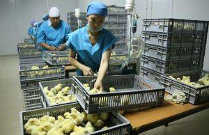 птицефабрика в Алматинской области
