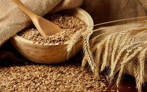 Костанайское зерно покупают 22 страны