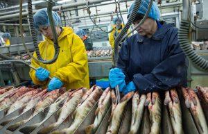 рыбный завод