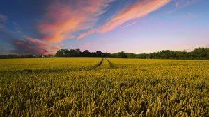 ЕС может выделить Украине 26 миллионов евро помощи для проведения земельной реформы