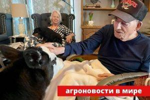 теленок в доме престарелых