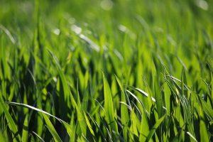Влияние сроков посадки покровных культур на свойства почвы через 4 года