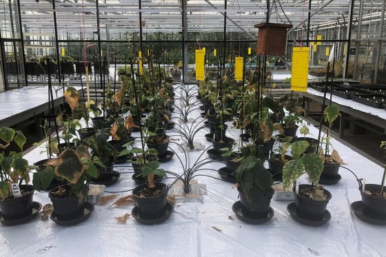 Выращивание сельскохозяйственных культур с использованием марсианских стимуляторов почвы
