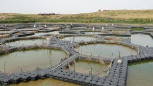 рыбоводство в Туркестанской области