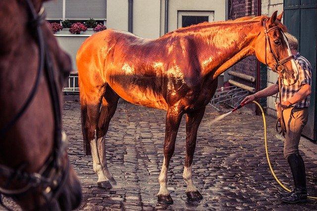 Гидротерапия лошадей