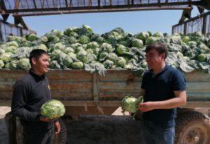 Жетысайские фермеры получают по два урожая с одного поля в год